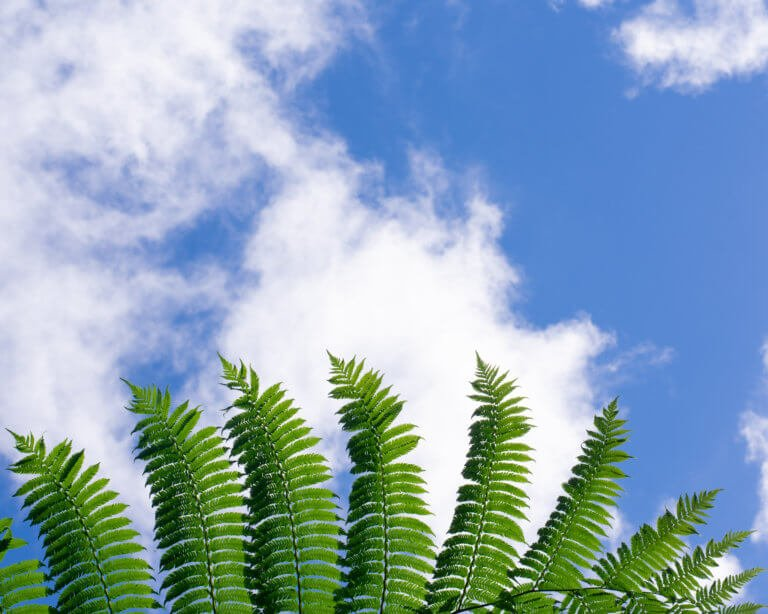 Fern and blue sky