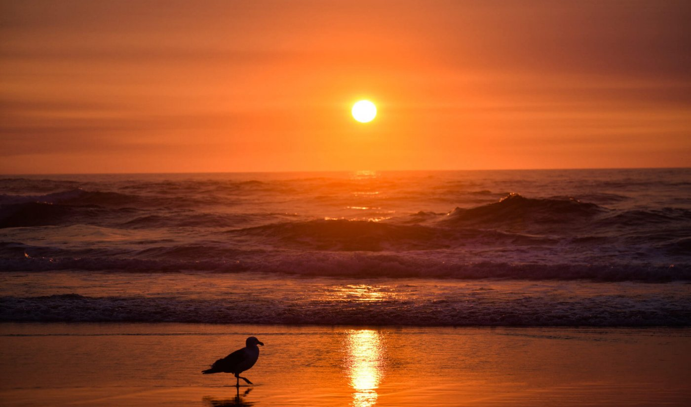 Seagull silhouette in ocean waves with orange sunset background